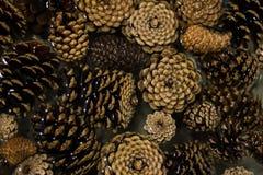 Cones de flutuação do pinho Fotos de Stock Royalty Free