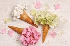Cones de gelado com flores da hortênsia Fotografia de Stock