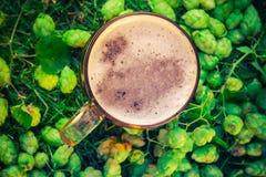 Cones de lúpulo do fundo da cerveja da pinta da vista superior Imagem de Stock Royalty Free