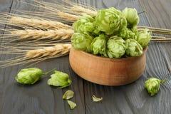 Cones de lúpulo dos ingredientes da fabricação de cerveja de cerveja e orelhas do trigo na tabela de madeira escura Conceito da c imagens de stock