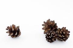 Cones de um pinho Foto de Stock