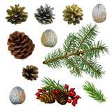 Cones do cedro e do pinho, bagas, ramos spruce, porcas W isolado fotografia de stock royalty free
