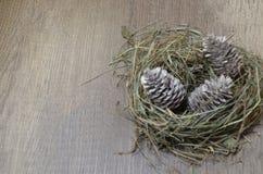 Cones do ninho e de abeto, para o espaço da cópia foto de stock