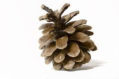 Cones do pinho Foto de Stock Royalty Free