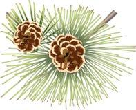 Cones do pinho ilustração do vetor