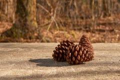 Cones 2 do pinho Fotografia de Stock