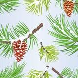 Cones do pinho da decoração do Natal sem emenda da textura e do ano novo dourados e illustr do vetor do vintage dos ramos de árvo ilustração stock