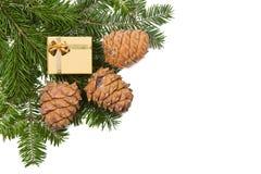 Cones do pinho e caixa de presente na árvore de Natal Imagens de Stock Royalty Free