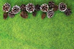 Cones do pinho e de abeto no fundo vibrante de feltro do verde fotografia de stock