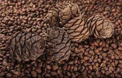 Cones do pinho e porcas de pinho Fotografia de Stock