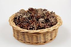 Cones do pinho em uma cesta Imagem de Stock Royalty Free
