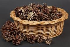 Cones do pinho em uma cesta Imagens de Stock
