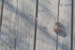 Cones do pinho na plataforma Fotos de Stock Royalty Free