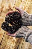 cones do pinho no backgroun de madeira Foto de Stock Royalty Free