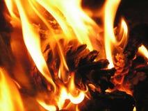 Cones do pinho no incêndio Fotos de Stock