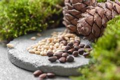 Cones do pinho, porcas e musgo natural em um fundo concreto cinzento Imagem de fundo foto de stock royalty free