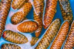 Cones do pinho que embebem na água azul para remover as pragas para projetos do ofício imagens de stock royalty free