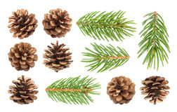 Cones do ramo e do pinho de árvore do abeto isolados no fundo branco Imagem de Stock