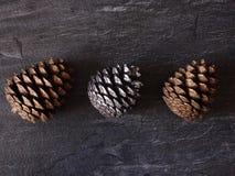 Cones em um fundo cinzento Imagens de Stock