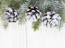 Cones and fir branches Stock Photos