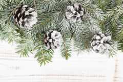 Cones and fir branches Royalty Free Stock Photo