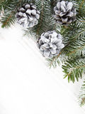 Cones and fir branches Stock Image