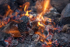Cones in the fire Royalty Free Stock Photo