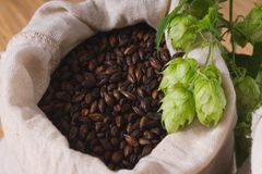 Cones of hops and chocolate malt in bag. top view, closeup. Ingredient in beer industry. Craft beer brewing from grain barley. Malt. Ale or lager from pale or stock image