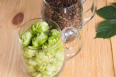 Cones of hops and chocolate malt in glass mug, closeup. Ingredie. Nt in craft beer brewing from grain barley malt. Ale or lager from pilsner malt Stock Photography