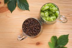 Cones of hops and chocolate malt in glass mug, closeup. Ingredie. Nt in craft beer brewing from grain barley malt. Ale or lager from pilsner malt Royalty Free Stock Image