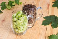 Cones of hops and chocolate malt in glass mug, closeup. Ingredient in craft beer brewing from grain barley malt. Ale or lager fro. M pilsner malt royalty free stock photography