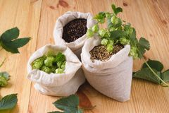 Cones of hops and pale caramel, chocolate malt in bags on woode. N background. top view, closeup. Ingredient in beer industry. Craft beer brewing from grain stock photo