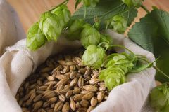 Cones of hops and pale caramel malt in bag, closeup. Ingredient royalty free stock photos