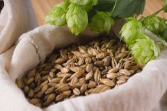 Cones of hops and pale caramel malt in bag, closeup. Ingredient stock image