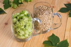 Cones of hops and pale caramel malt in glass mug, closeup. Ingredient in craft beer brewing from grain barley malt. Ale or lager. From pilsner malt royalty free stock images
