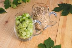 Cones of hops and pale caramel malt in glass mug, closeup. Ingre. Dient in craft beer brewing from grain barley malt. Ale or lager from pilsner malt Royalty Free Stock Photography