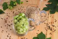 Cones of hops and pale caramel malt in glass mug, closeup. Ingre. Dient in craft beer brewing from grain barley malt. Ale or lager from pilsner malt Stock Photos