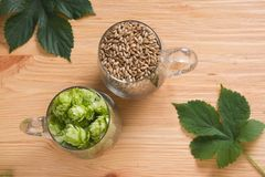 Cones of hops and pale caramel malt in glass mug, closeup. Ingre. Dient in craft beer brewing from grain barley malt. Ale or lager from pilsner malt Royalty Free Stock Images
