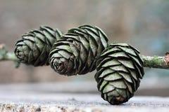 3 cones macro Imagem de Stock