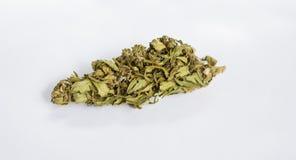 Cones marijuana - cannabis plants, medical anesthetic Stock Photo