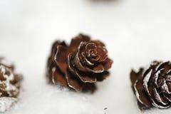 Cones na neve Imagens de Stock Royalty Free