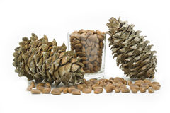 Cones and nuts of the Korean pine Royalty Free Stock Photos