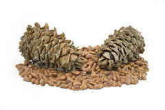 Cones and nuts of the Korean pine Stock Photos