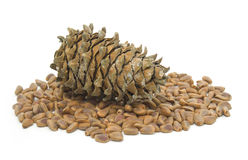 Cones and nuts of the Korean pine Royalty Free Stock Images
