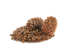 Cones and Nuts of Siberian Cedar Pine Stock Photo