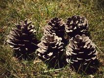 Cones Stock Photos