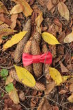 Cones and red bow. Autumn leaves, cones, red bow Stock Image