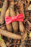 Cones and red bow. Autumn leaves, cones, red bow Stock Photos