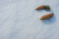 Cones on snow Royalty Free Stock Photos