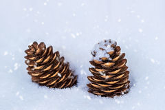 Cones in the snow Royalty Free Stock Image